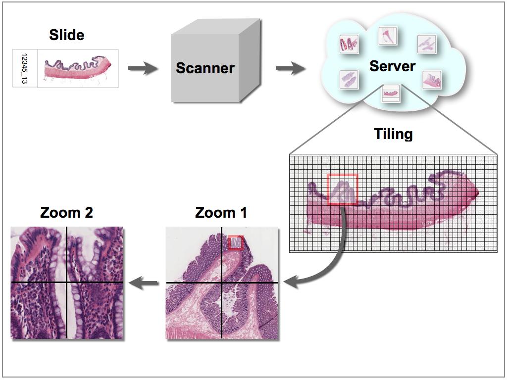 Virtuelle Mikroskopie: Digitalisierung der Bilder